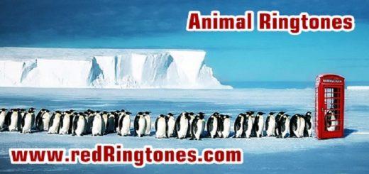 Animal Ringtones   www.redRingtones.com