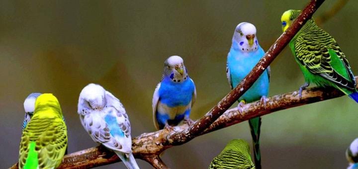 Birds Sounds Parrots | www.redRingtones.com