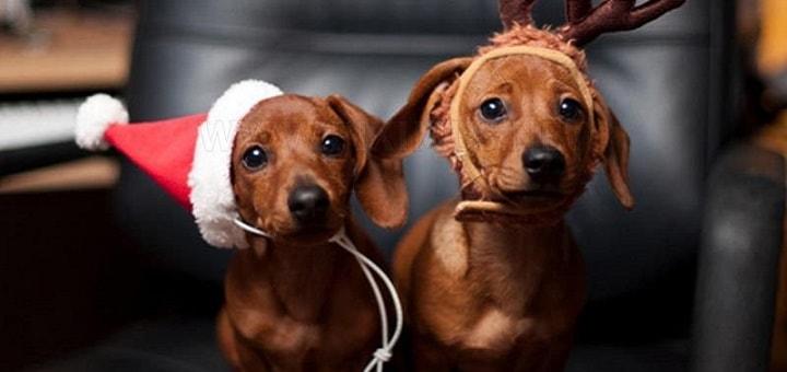 Dogs Barking Jingle Bells | www.RedRingtones.com