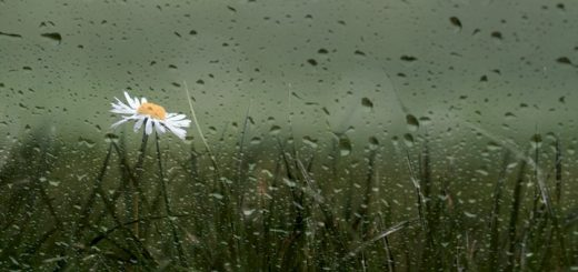 Kiss The Rain | www.RedRingtones.com