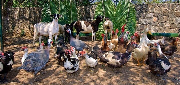 Farm Sounds   www.RedRingtones.com