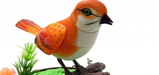 Bird Sound Ringtone | www.RedRingtones.com