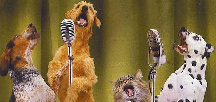 Cat Dog Singing Ringtone | www.RedRingtones.com