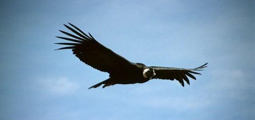 El Condor Pasa Ringtone 2 | www.RedRingtones.com
