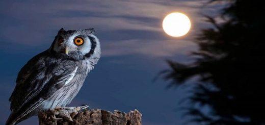 Owl Sound at Night | www.RedRingtones.com