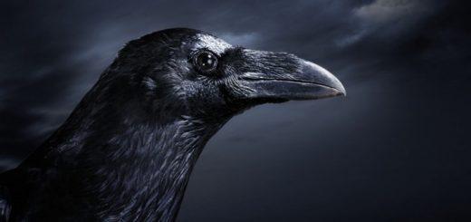 Raven Ringtone