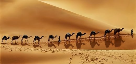 Desert Caravan Ringtone