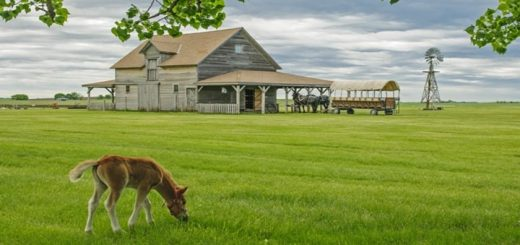 Roundup On The Prairie Ringtone
