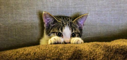 The Curious Kitten Ringtone