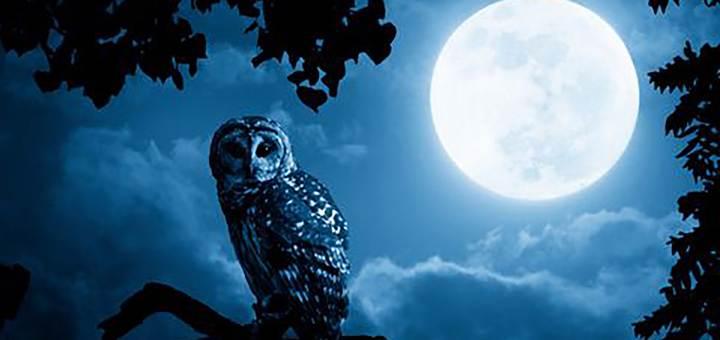 Night Owl Ringtone