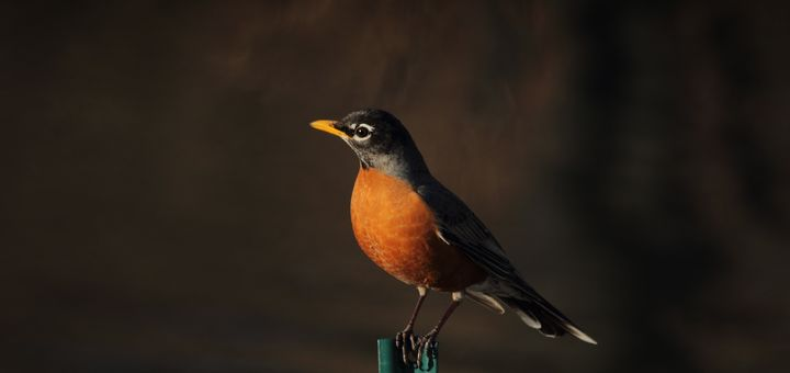 bird tweet message tone