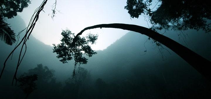 Jungle Intrigue Ringtone