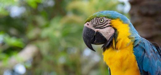 Parrot Ringtone