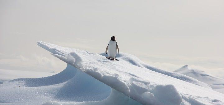 Penguin Ringtone