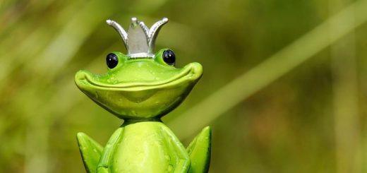 frog notification sound