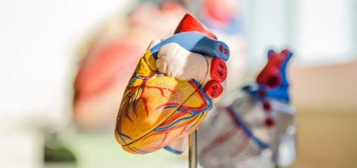 Human Heart Stops Beating Ringtone