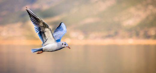 seagull ringtone